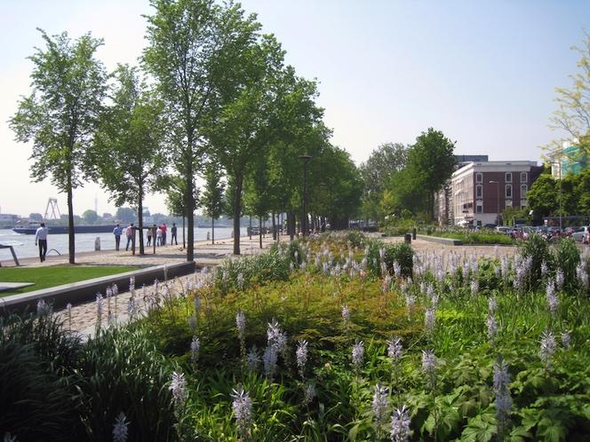 Rotterdam Westerkade